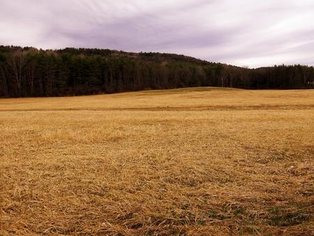 Bruin gras veld met boom haag en paarse hemel