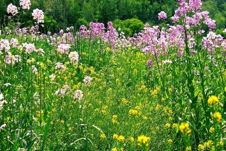 午後の野の花