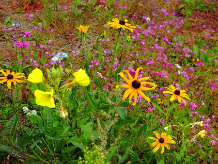 Colorful wildflower patch