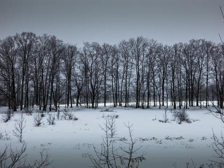 Row of trees in winter Banco de Imagens