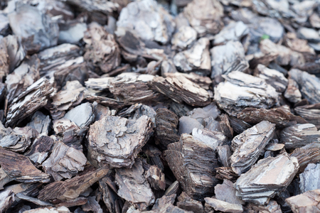 Shredded tree bark for decoration and mulching in landscape design. Crushed tree bark texture background closeup. Stock Photo