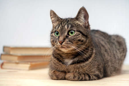 Tabby cat with green eyes lies on table, next to stack of books. Cat in sharp focus, books in blurred focus.