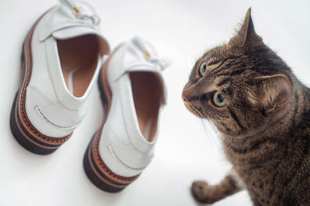 Cat and white shoes. The cat next to the shoes.