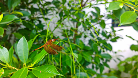 The dragonfly sits has a rest on a green small stalk of a plant photo
