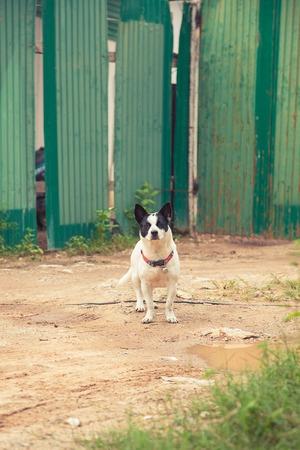 asian house plants: Factory guard thai dog