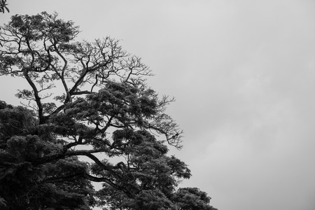 emaciated: Silhouette of a Bare Tree in Black and White