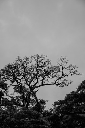 vistas: Silhouette of a Bare Tree in Black and White