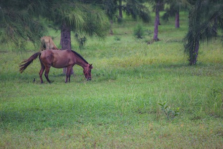 graze: Horses graze in a field