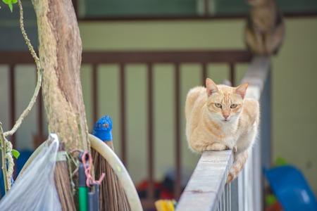 railing: Orange tabby sitting on an iron railing. Stock Photo