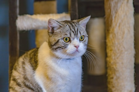 gray cat: Beautiful gray and white cat Stock Photo