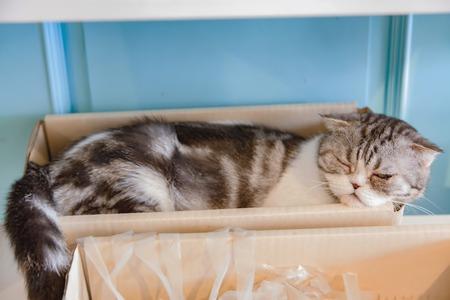 gray cat: Beautiful gray and white cat is sleeping.