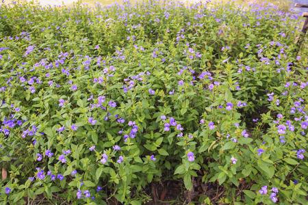 flora: Purple flower flora floral parks garden