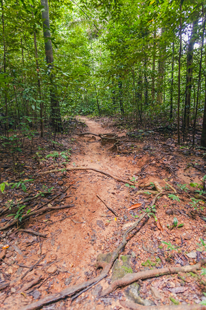 timeless: Hiking trail through a forest in Tiger Cave Temple, Thainand