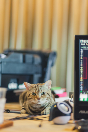 Cute cat on the desk in the office. Stock Photo