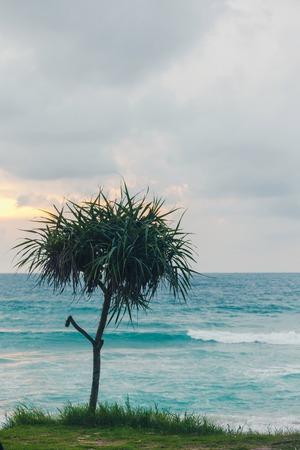 Beautiful tropical plant Pandanus tree on sand beach