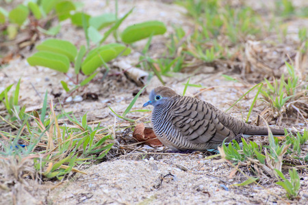 incubate: Beautiful Birds looking for food in the beach