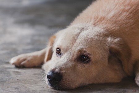Portrait dog sleeps on the cement floor Stock Photo