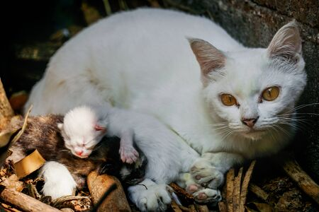 White cat with baby 스톡 콘텐츠