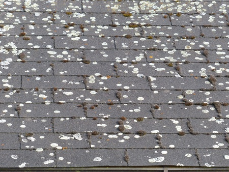roofing felt: Weathering and moss on a roof