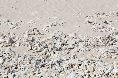 bleaching: Coral bleaching on the sandy beach as structural Stock Photo