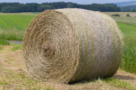 subsidy: Hay rolls in a field against forest.