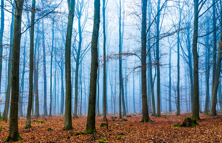 discolored: Magic forest in fog in blue and orange. Stock Photo