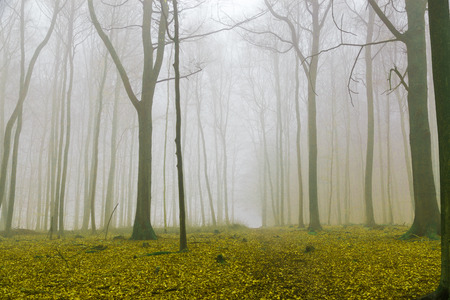 discolored: Fantasy forest with fog and yellow foliage.