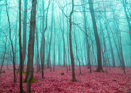 mystical forest: Mystical forest in red and turquoise