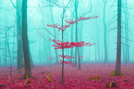 Mystical forest in red and turquoise.