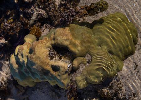 ebb: Corals Le Morne Mauritius at low tide. Stock Photo