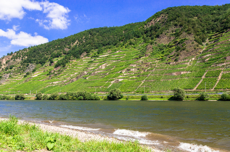 mosel: Vineyards with Mosel in summer.