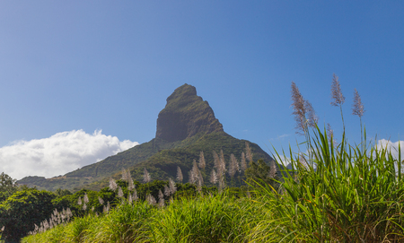 Piton de la Petite with sugar cane blossom mountain on Mauritius panorama. Stock Photo