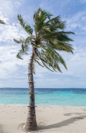 Photo of Beach with palm tree in Meedhoo Raa Atoll island, Maldives.