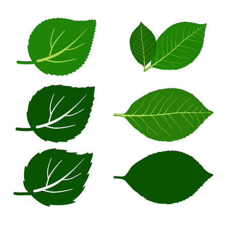 Set of leaves and leaf pair Vector Illustration Illustration
