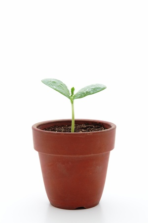 pot light: Young plant in small flowerpot