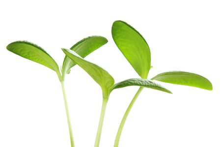 Young plant isolated on white background Banco de Imagens