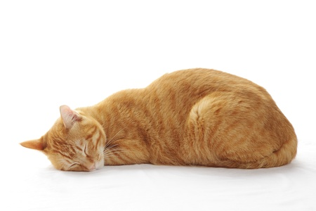 Ginger cat sleeping on the bed photo