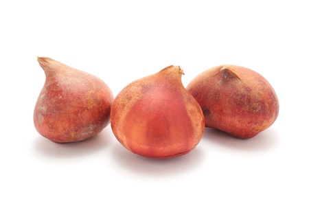 bulb tulip: Three tulip bulbs