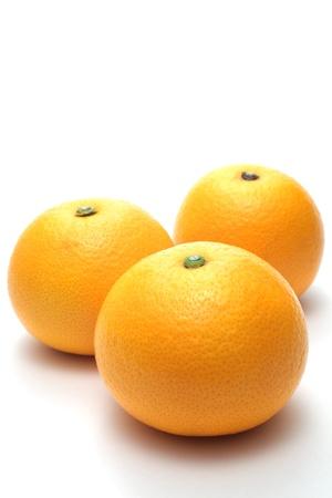 Hassaku orange (Citrus hassaku)