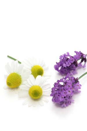 Chamomiles and lavender flowers on white background photo