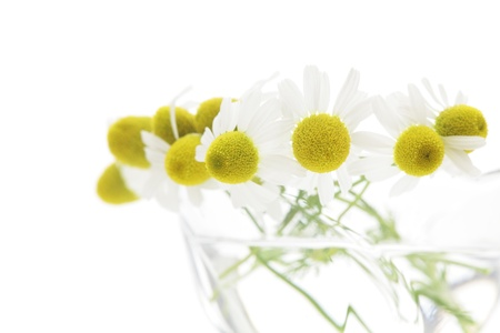 matricaria recutita: Chamomiles in glass on white background