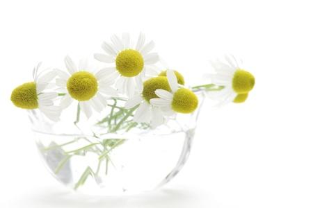 matricaria recutita: Chamomiles in vetro su sfondo bianco