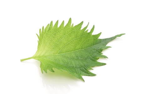Green perilla, shiso  photo