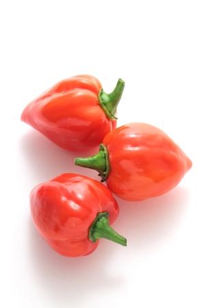 habanero: Habanero chilli on white background