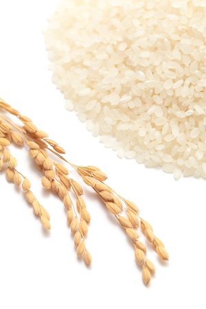 Ears of rice with white rice