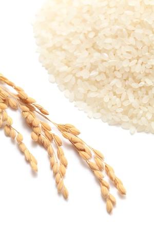 arroz blanco: Orejas de arroz con arroz blanco