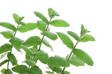 viands: Apple mint leaves Stock Photo