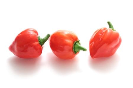 habanero: Habanero chilli