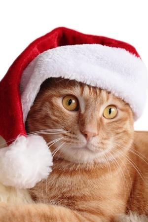 christmas costume: Ginger cat in christmas cap Stock Photo