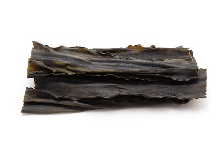 alga marina: Kombu, mar vegetal en el fondo blanco